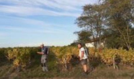"""Le repos des vignes - Domaine du """"Crêt de Bine"""""""