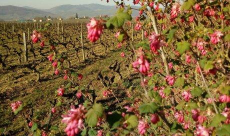 """Le printemps est là - Domaine du """"Crêt de Bine"""""""