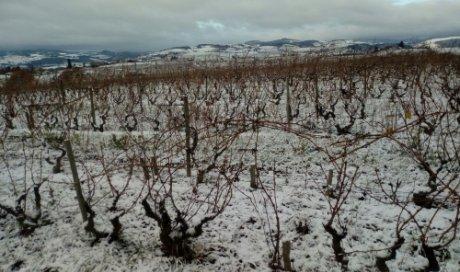 """Premières neiges hiver 2017 - Domaine du """"Crêt de Bine"""""""