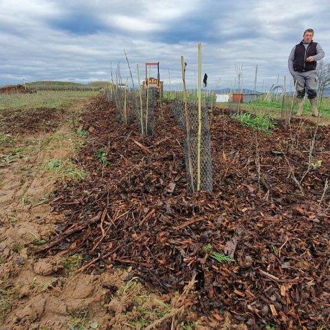 beaujolais agroforesterie à Sarcey