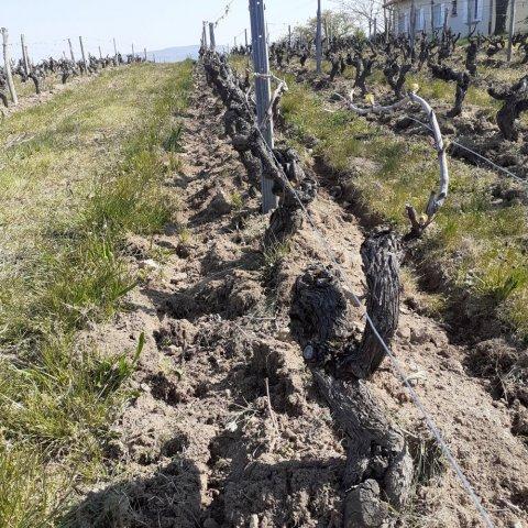 beaujolais sol en agriculture biologique
