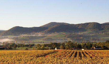 Les 2 grands plus  du vin bio Beaujolaisà Sarcey