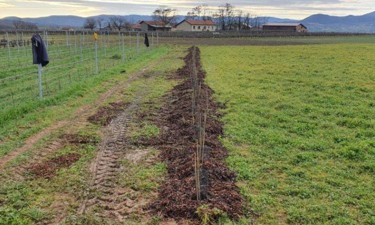 beaujolais agroforesterie à Sarcey, portes sud