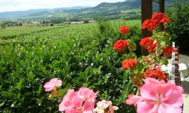 Gîte en plein coeur des vignes à Sarcey